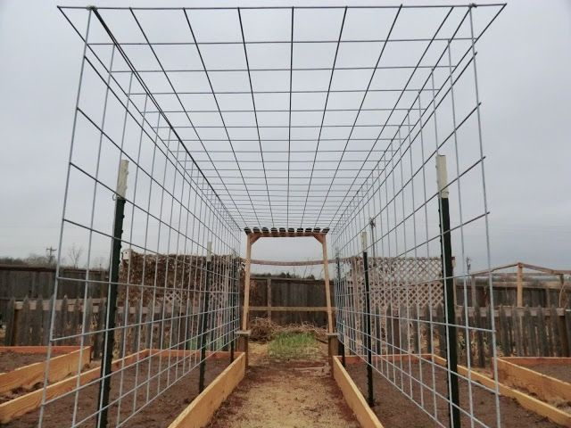 Pin By Jeanene Burke On Edible Gardening And Permaculture Cattle Panels Arbors Trellis Garden Trellis