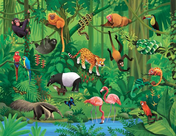 Low light quantity within forest tropical rainforest biome. Conversation Pieces On Behance Jungle Illustration Rainforest Animals Animal Art Projects