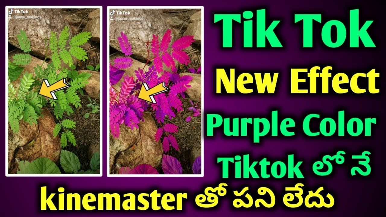How To Use Green To Purple Effect On Tiktok Tiktok Viral Green To Purple Greenscreen Viral Purple