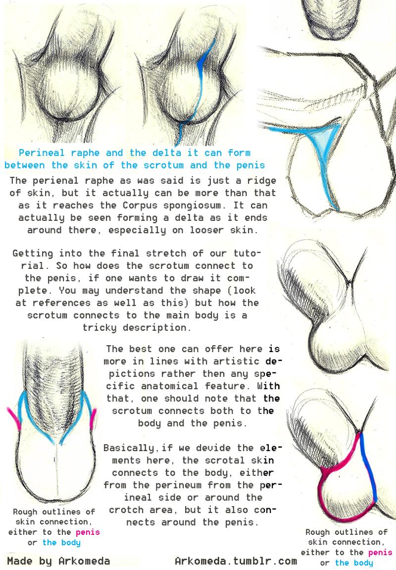 Resultado de imagem para draw penis tutorial perineum | drawing ...