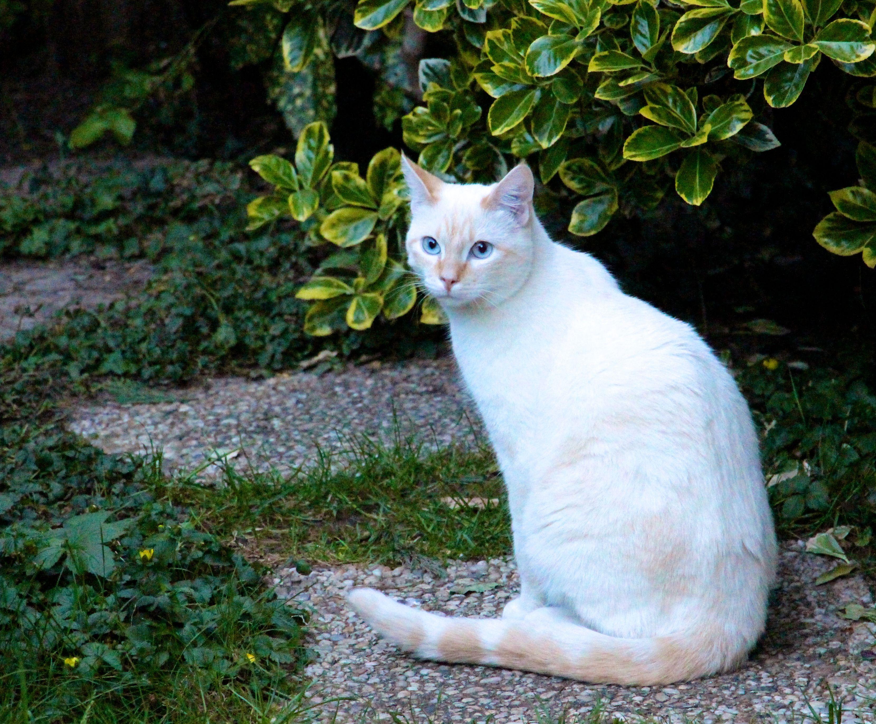 le vert lui va si bien au teint Animals, Cats, Flowers