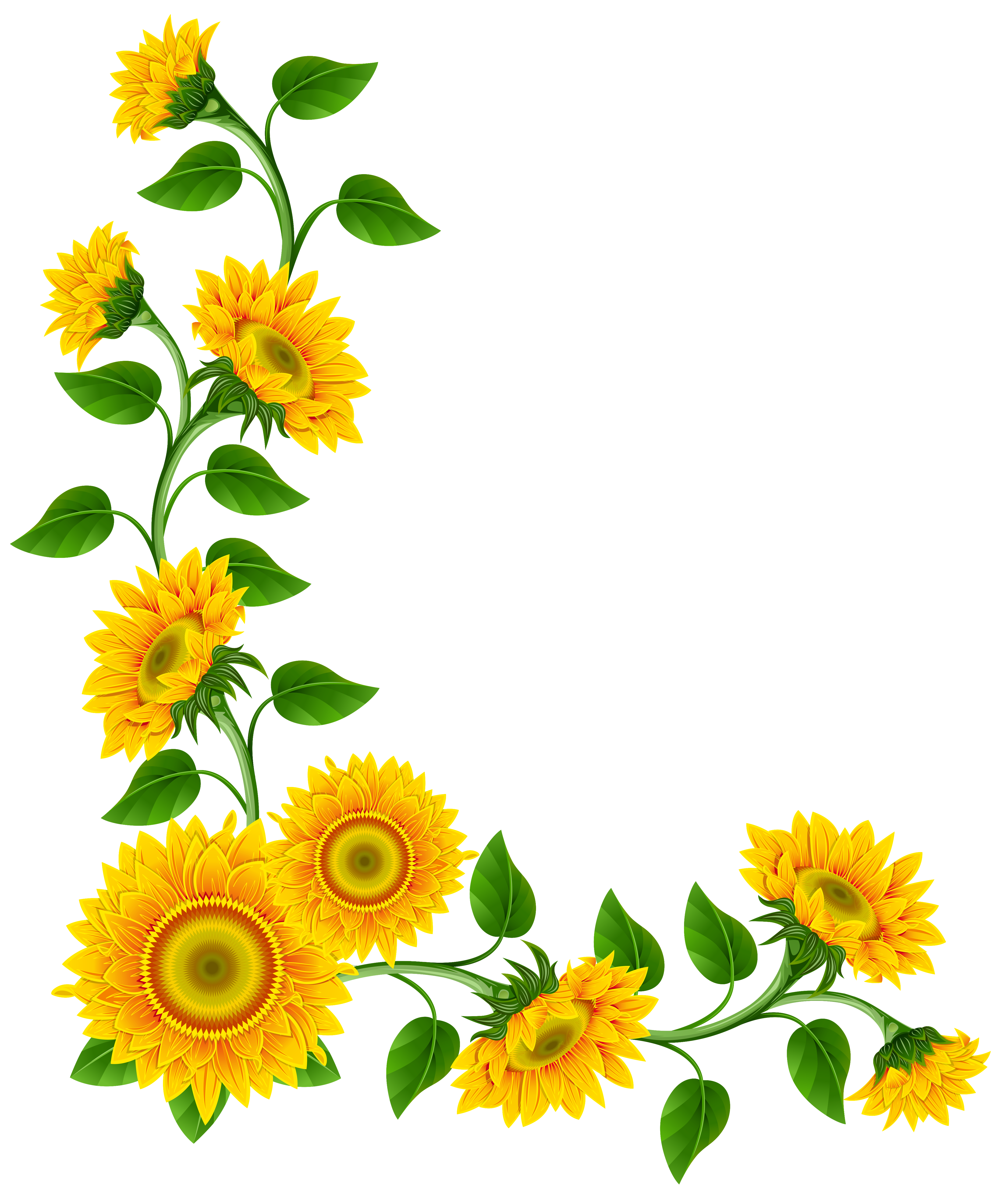 Decoration forward sunflower border decoration png clipart