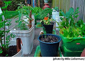 17 Best 1000 images about container gardens on Pinterest Gardens