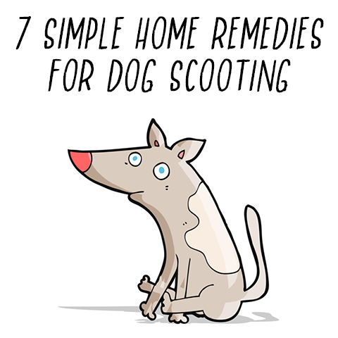 Photo of 7 Simple Home Remedies for Dog Scooting