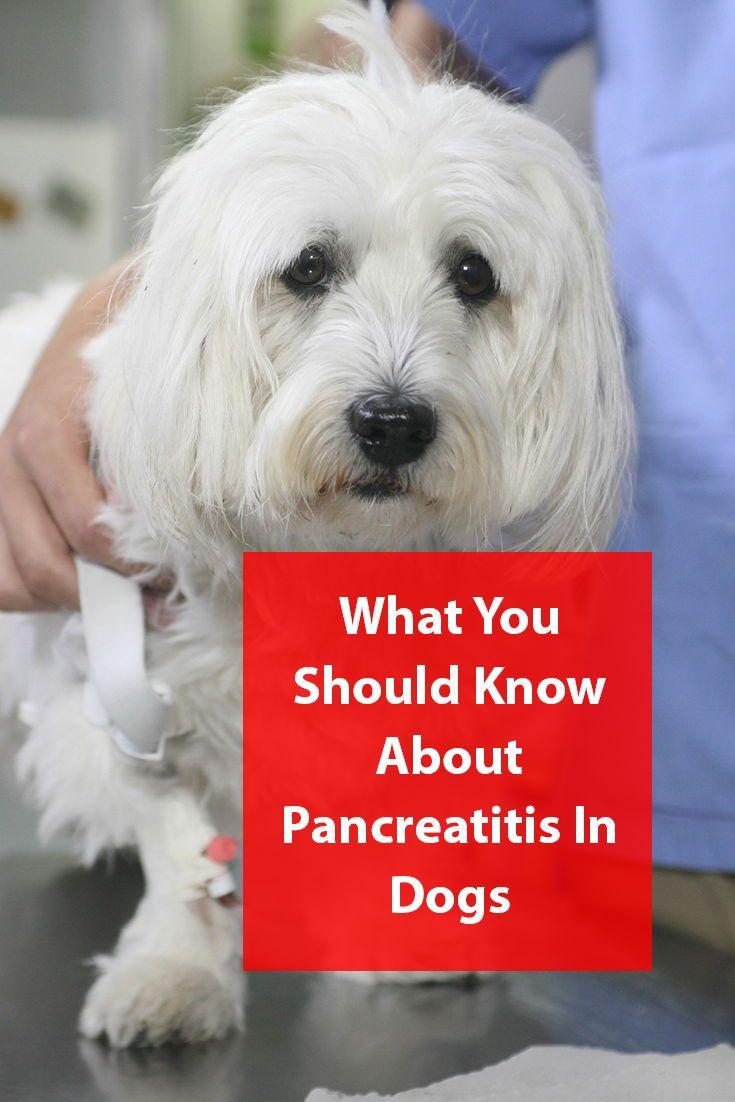 Dogs and pancreatitis pancreatitis in dogs dogs
