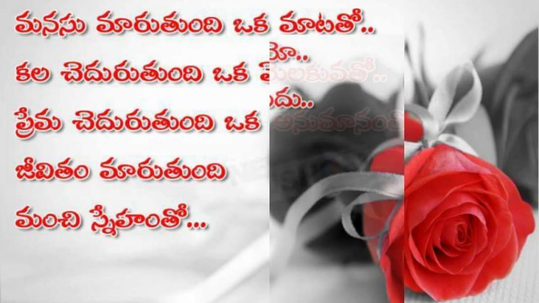 Simple Guidance For You In Rose Flower Quotes In Telugu Rose Flower Quotes In T Flower Guidance Quotes Rose In 2020 Rose Flower Quotes Flower Quotes Rose Flower