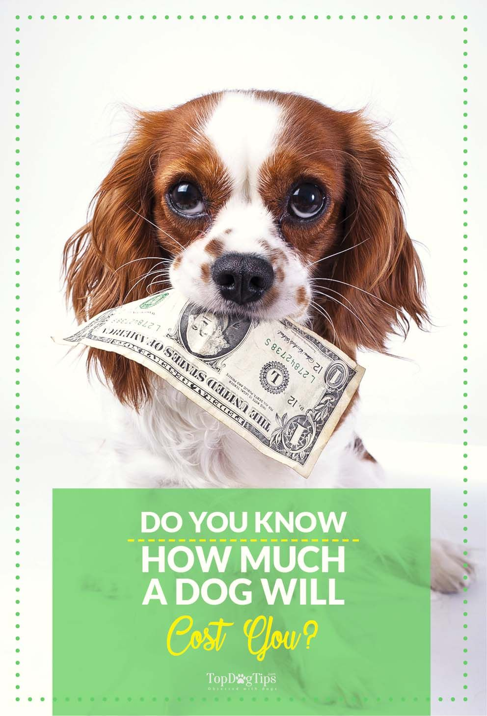 The Hidden Costs Of Dog Ownership With Images Neutering Dogs Dog Ownership Dog Spay