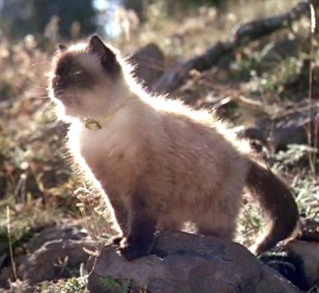 Sassy In Homeward Bound Dog Movies Homeward Bound Movie Cats And Kittens