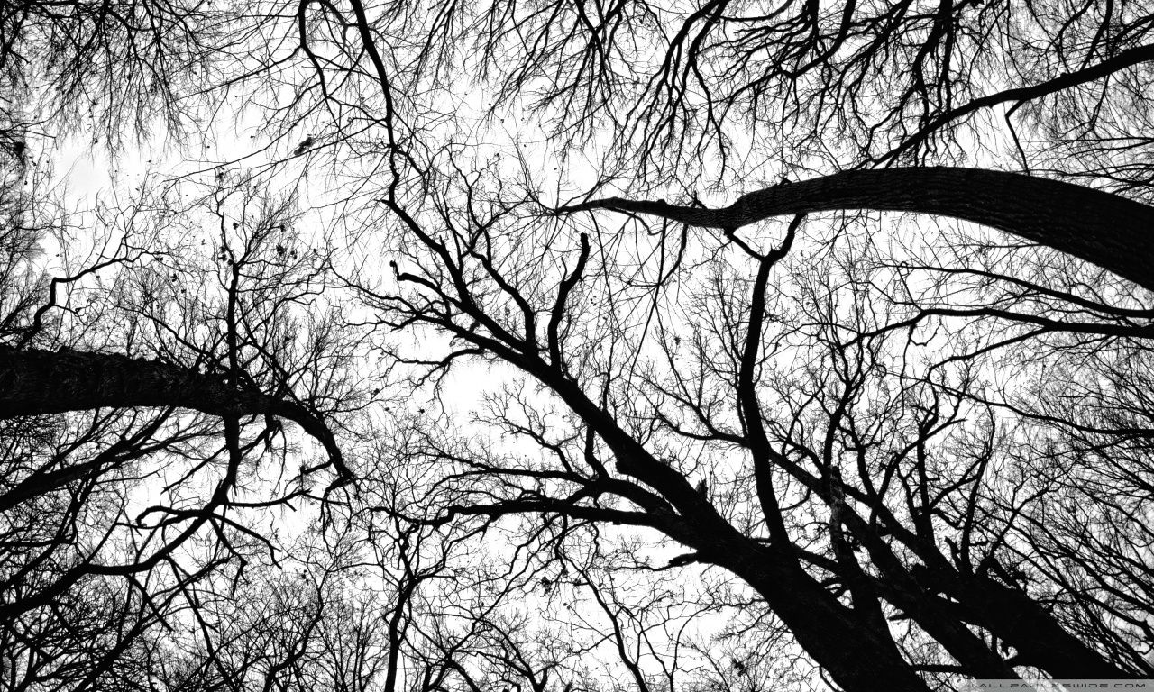 Hd wallpaper black and white - Black White Hd Wallpapers Backgrounds Wallpaper