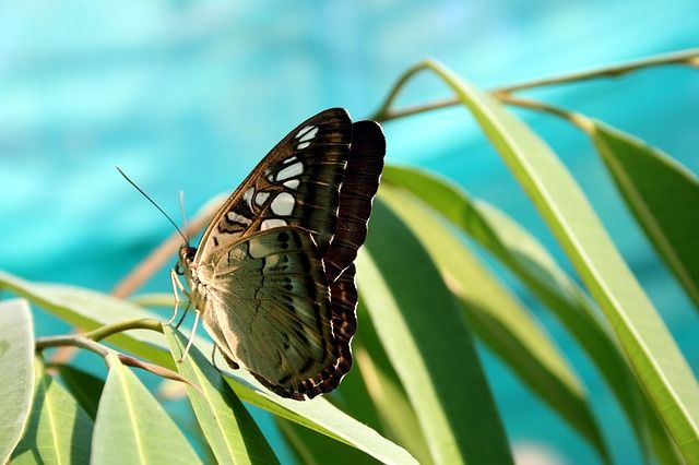 Butterfly Nature Insect Photo