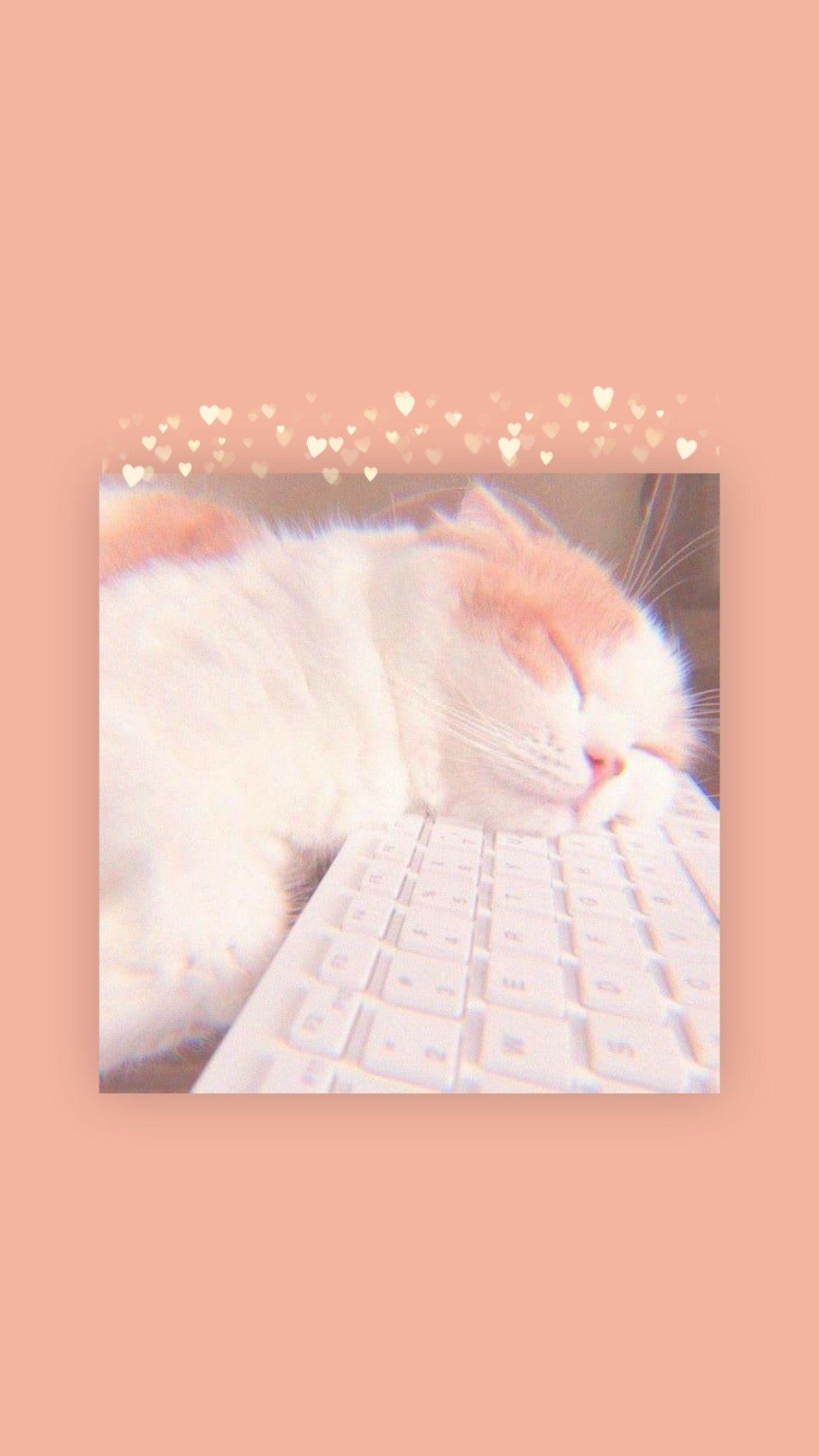 Cute Cat Aesthetic Wallpaper Wallpaper Estetika Kertas Dinding Wallpaper Iphone Lucu