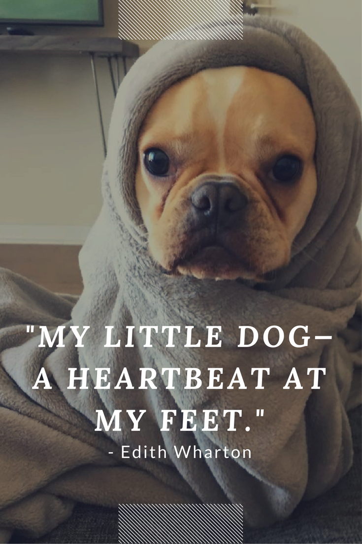My Little Dog A Heartbeat At My Feet Dog Quote Dog Quotes Dog Quotes Funny Dog Cuddles
