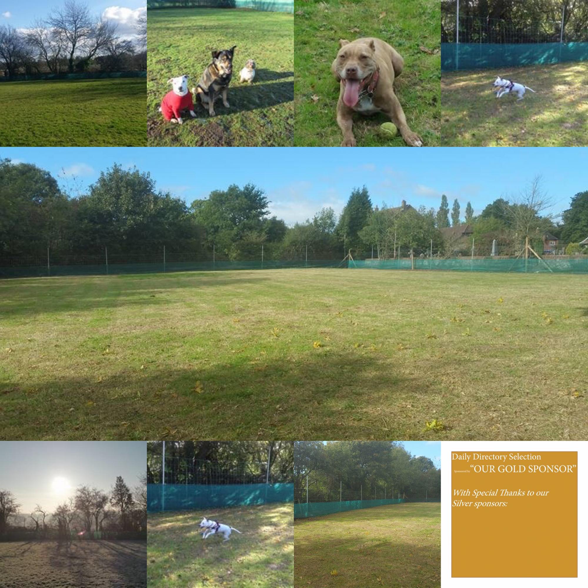 Db Training And Behaviour Enclosed Field Church Lane Headley Kt18 6le Http Www Dbtrainingandbehaviour Co Uk Our Fi Dog Play Area Dog Walking Dog Exercise