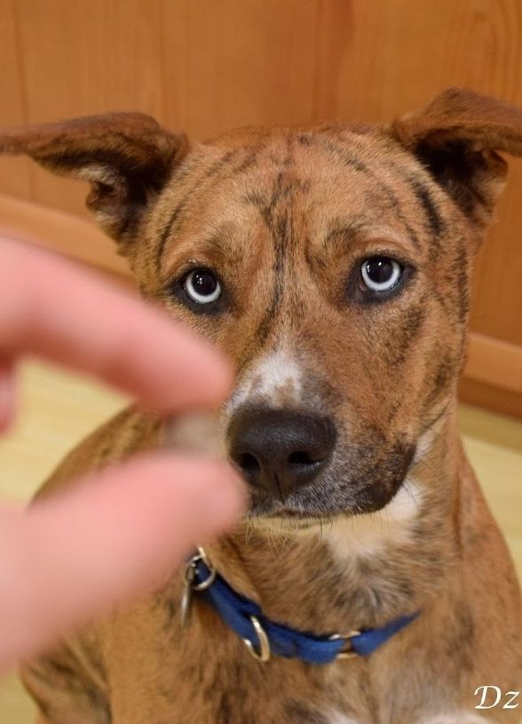 A Story About Positive Reinforcement For Scared Dogs Dog