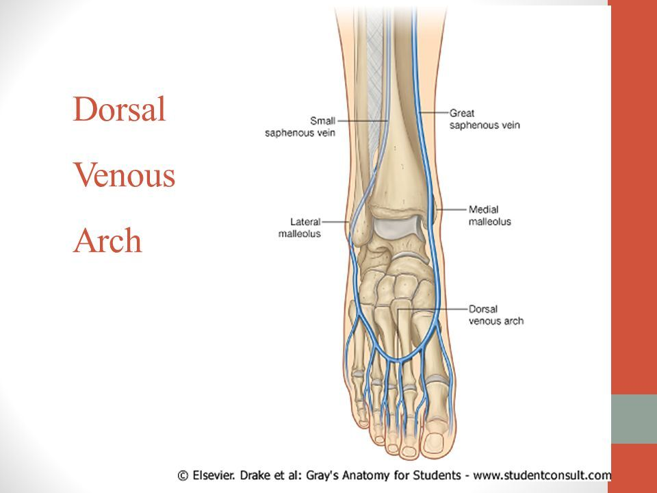 Image Result For Dorsal Venous Arch Exam Ap Pinterest Arch