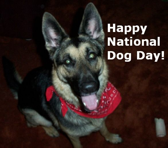 August 26th is National Dog Day!