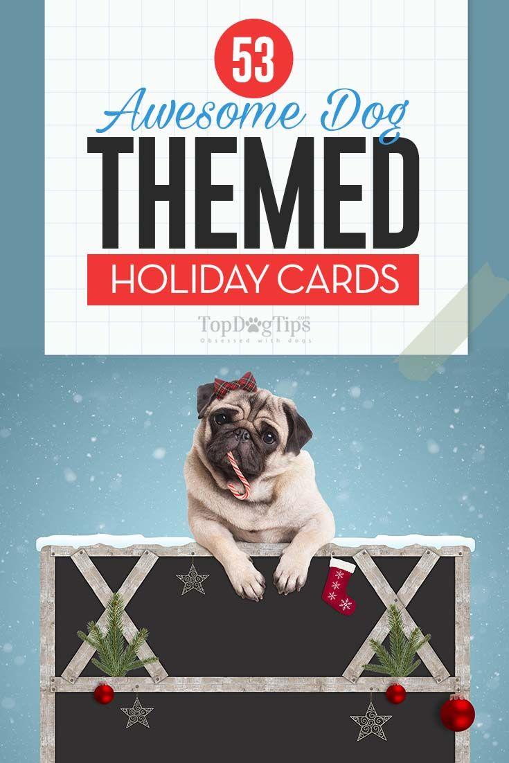 50 Most Awesome Dog Holiday Cards You Can Find | Top Dog Tips ...