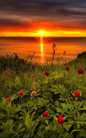 ✿ Flowers of the world! ✿ - Comunidade - Google+