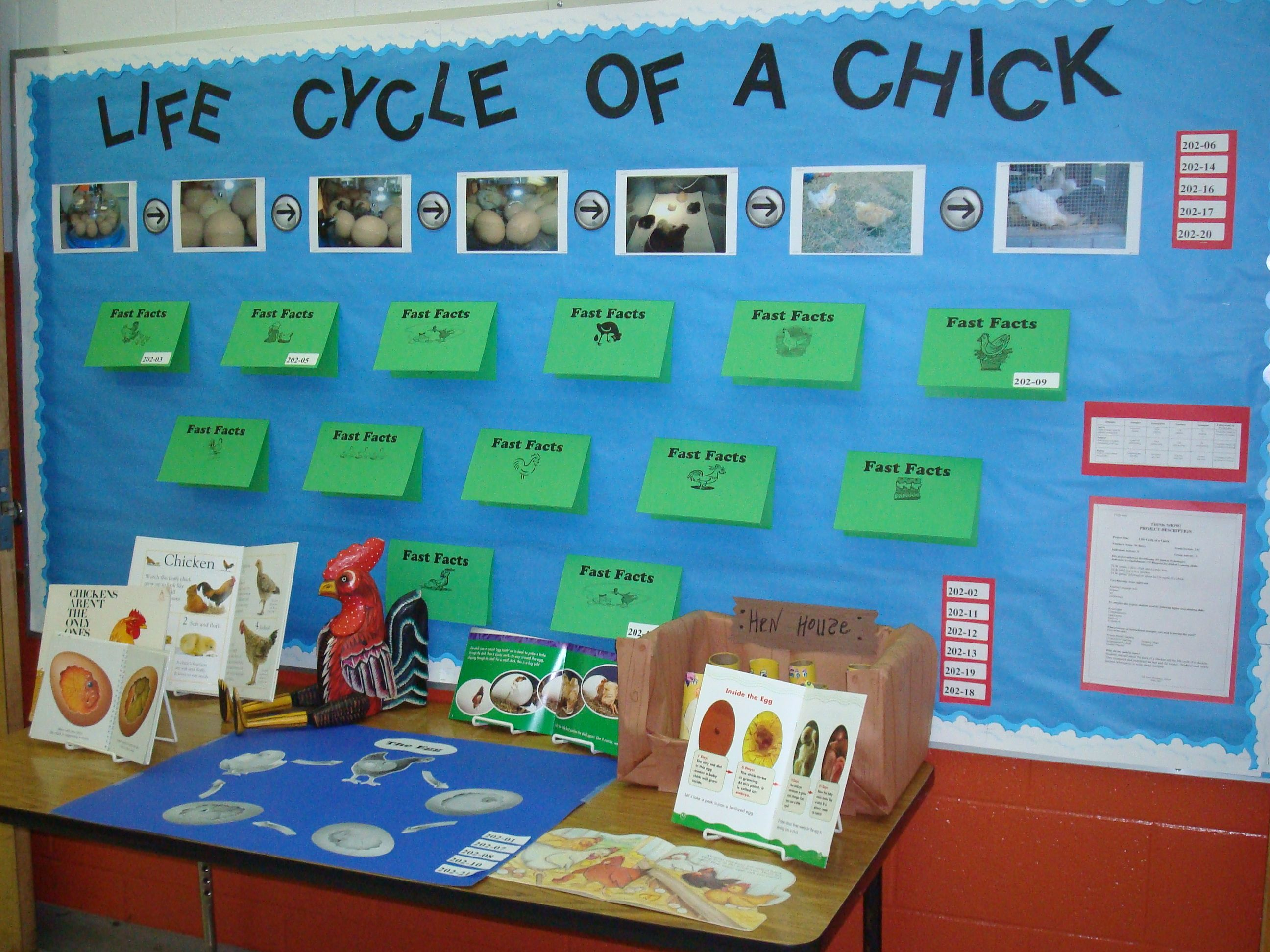 Life Cycle Of A Chick