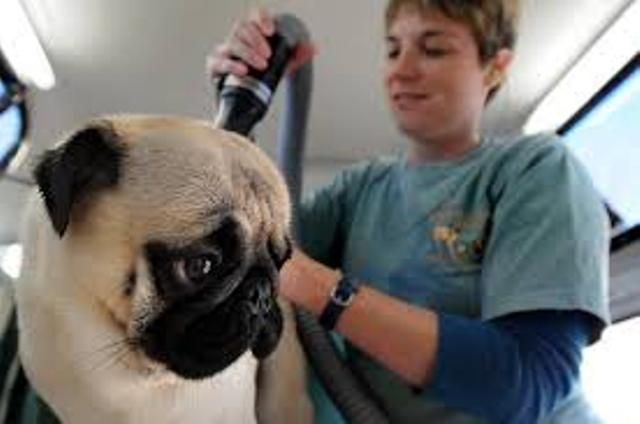 How To Take Care Of A Pug Puppy Pets World Pug Puppy Pugs