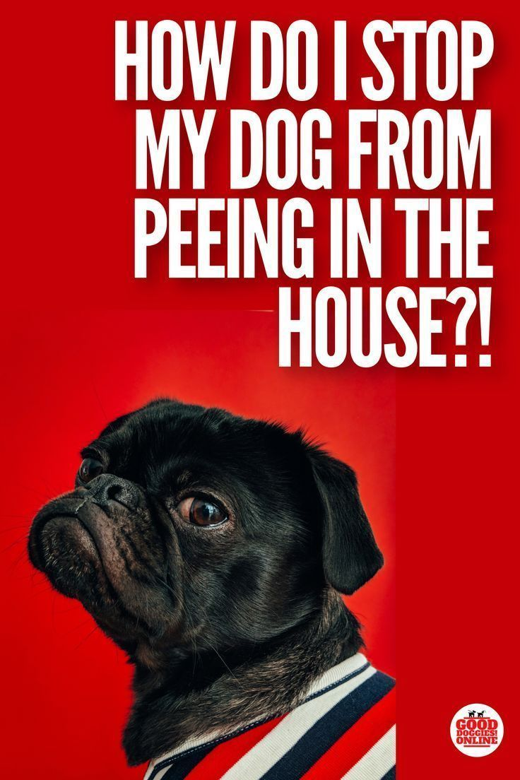 how to stop a dog from peeing when they are excited