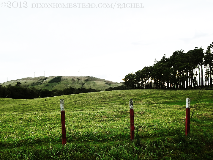 Pasture, for cows and/or horses, Guanacaste Province, Costa Rica.