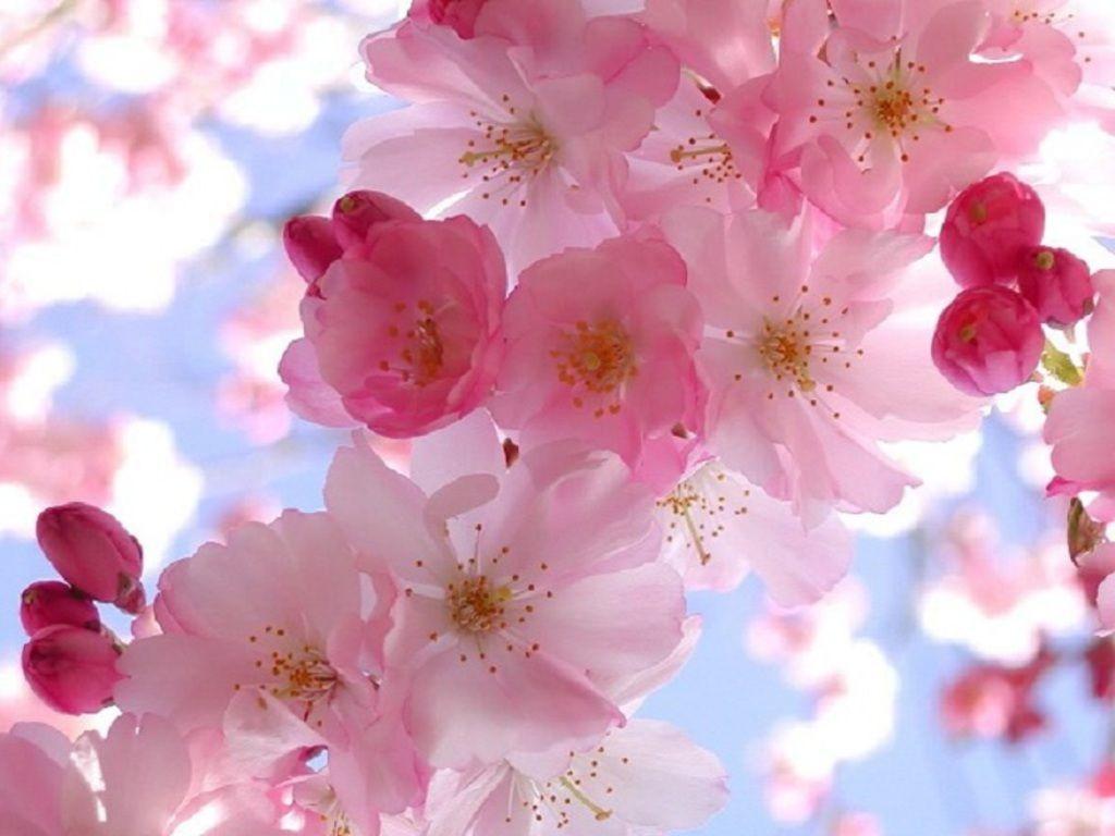 spring wallpaper and screensavers Free Spring Wallpaper