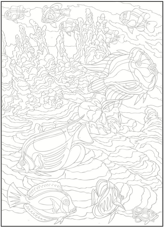Creative Haven Sea Life Color by Number Coloring Book | Creative ...