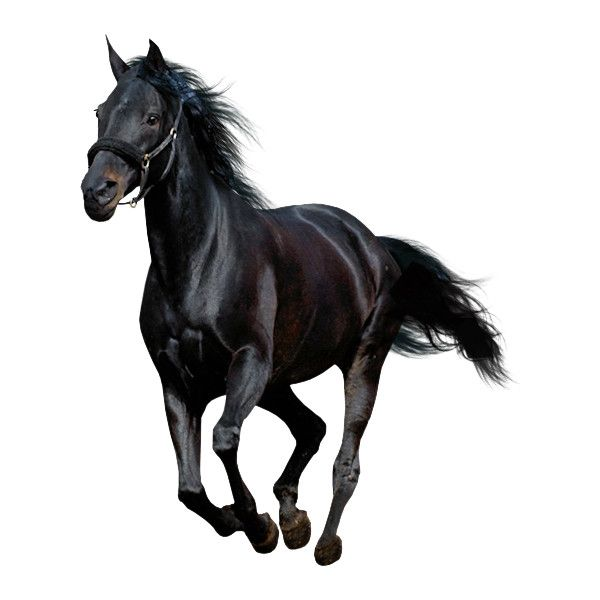 1patries Dr139 Black Horse Running 17 8 09 Top Designs Png Horses Animals Black Horse