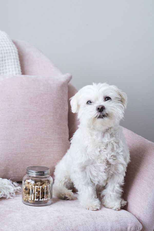 Diy Grain Free Dog Treat Recipe Personalized Easy Treat Jar
