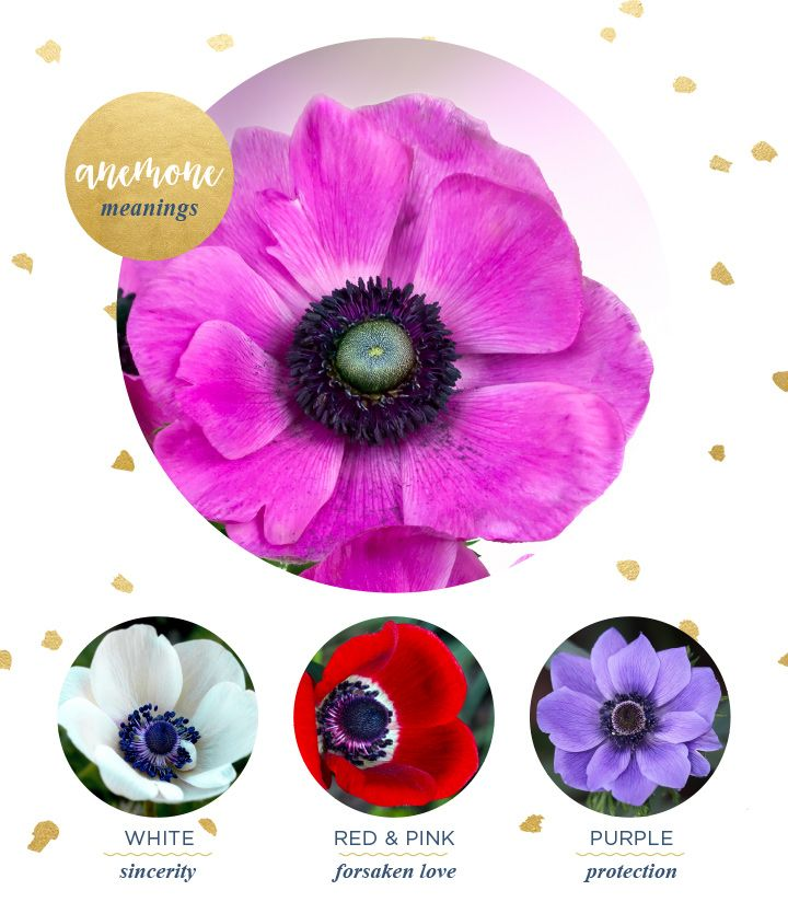 Anemone Meaning And Symbolism Ftd Com Flower Meanings Anemone Flower Flower Wallpaper