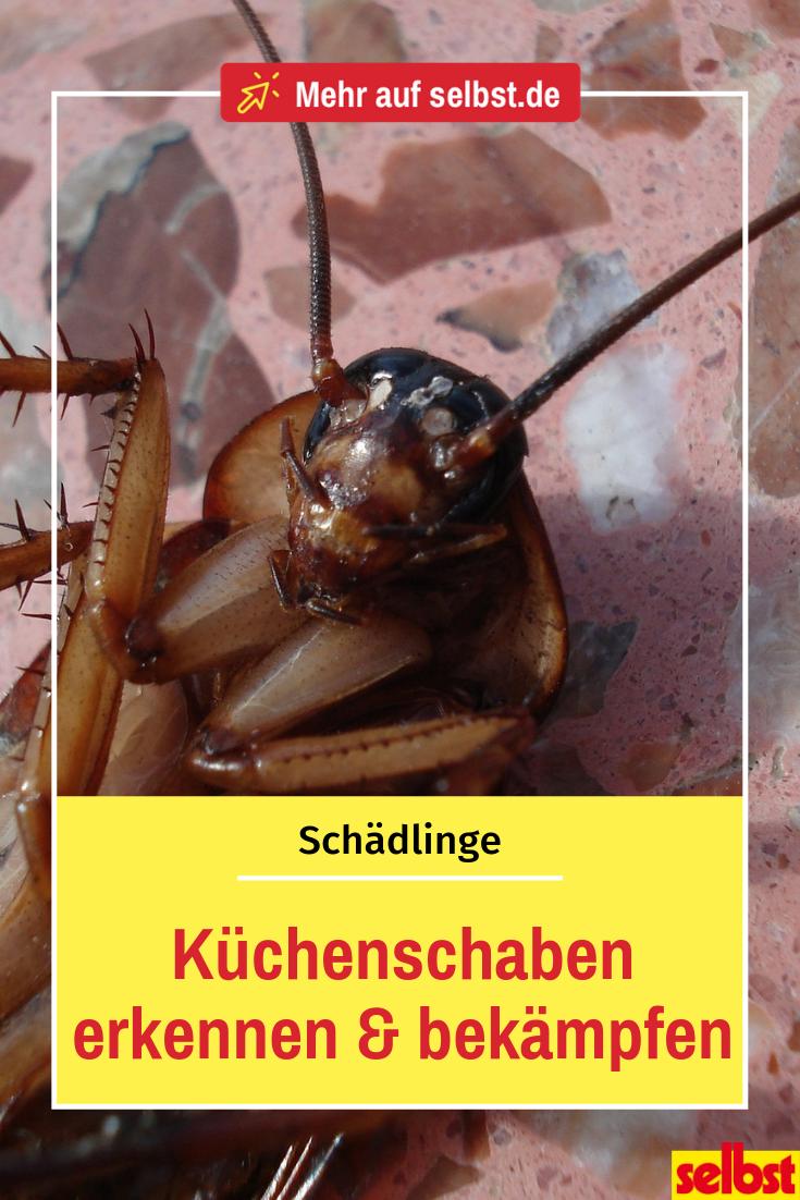Kuchenschabe Selbst De Hausmittel Gegen Blattlause Kakerlaken Bekampfen Ungeziefer