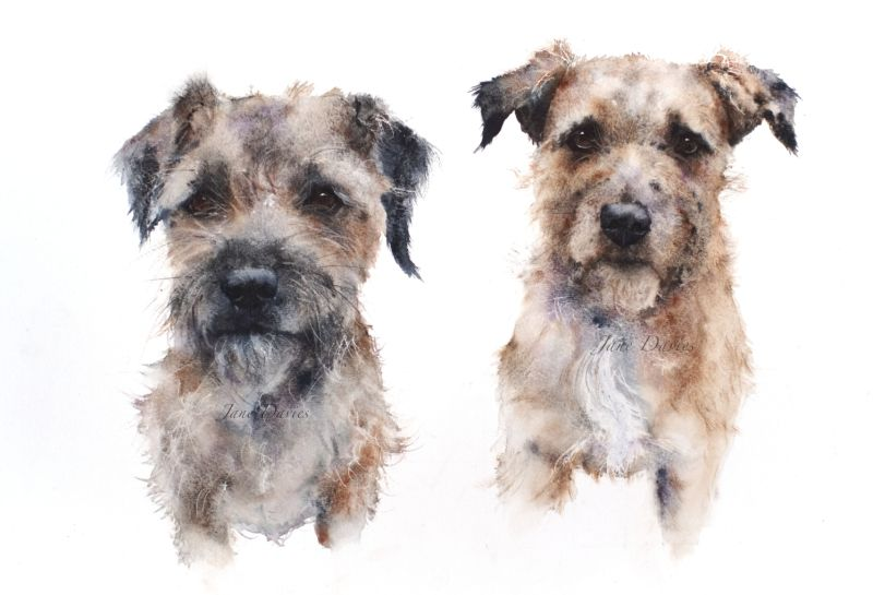 Jane Davies Watercolours Dogs Watercolor Dog Border Terrier