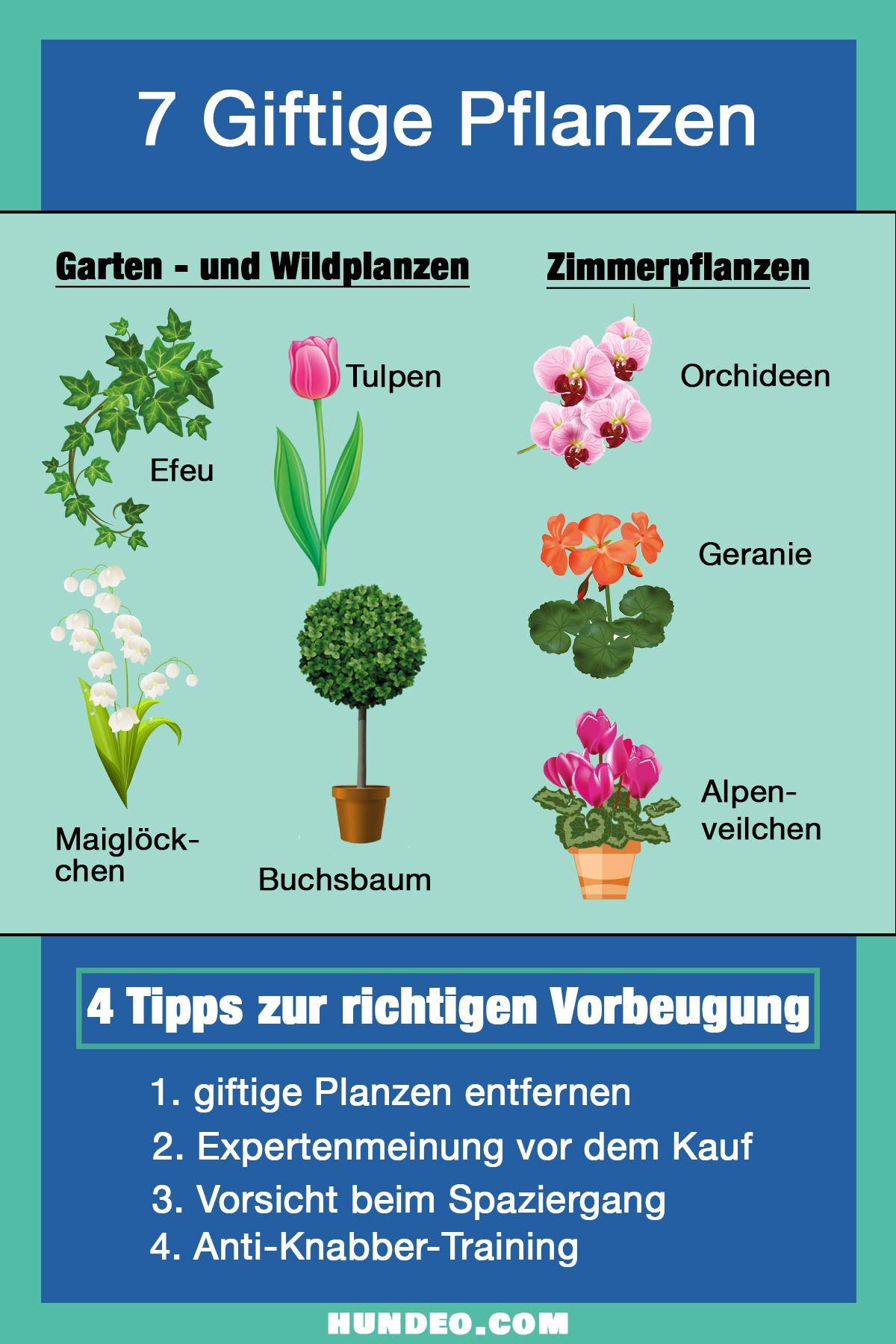 70 Giftige Pflanzen für Hunde (Mit Tipps zur Hilfe ...