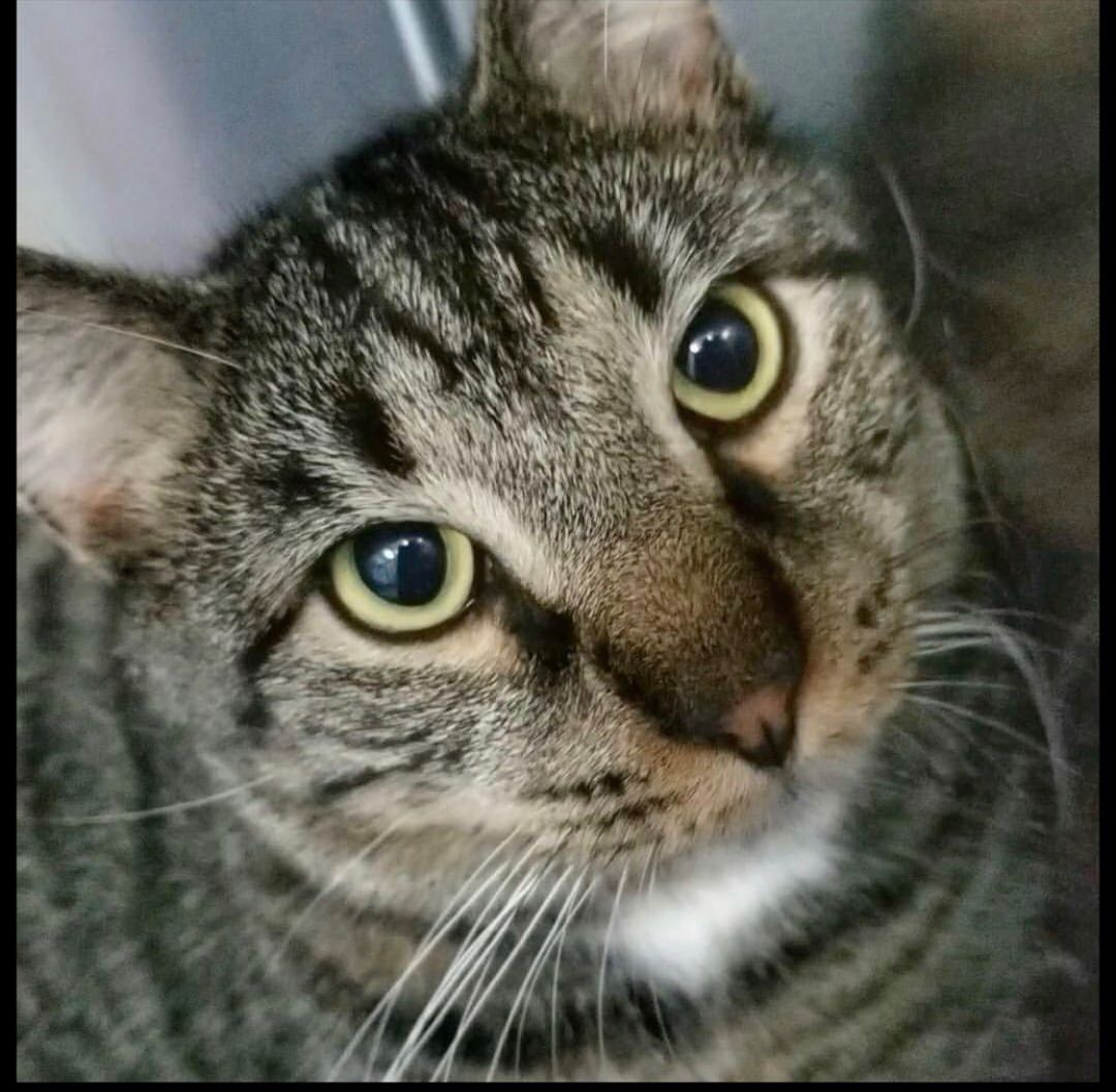 Adopt Beasley loves other cats! on Cats, Animal