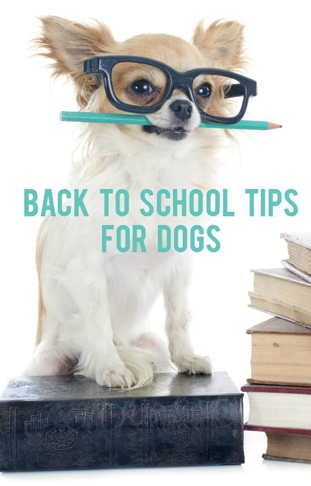 Hello September Where Did The Summer Go September Always Reminds Me Of Crisp Mornings Waiting For The Bus On The First Da Pets Facebook Dog Pet Businesses