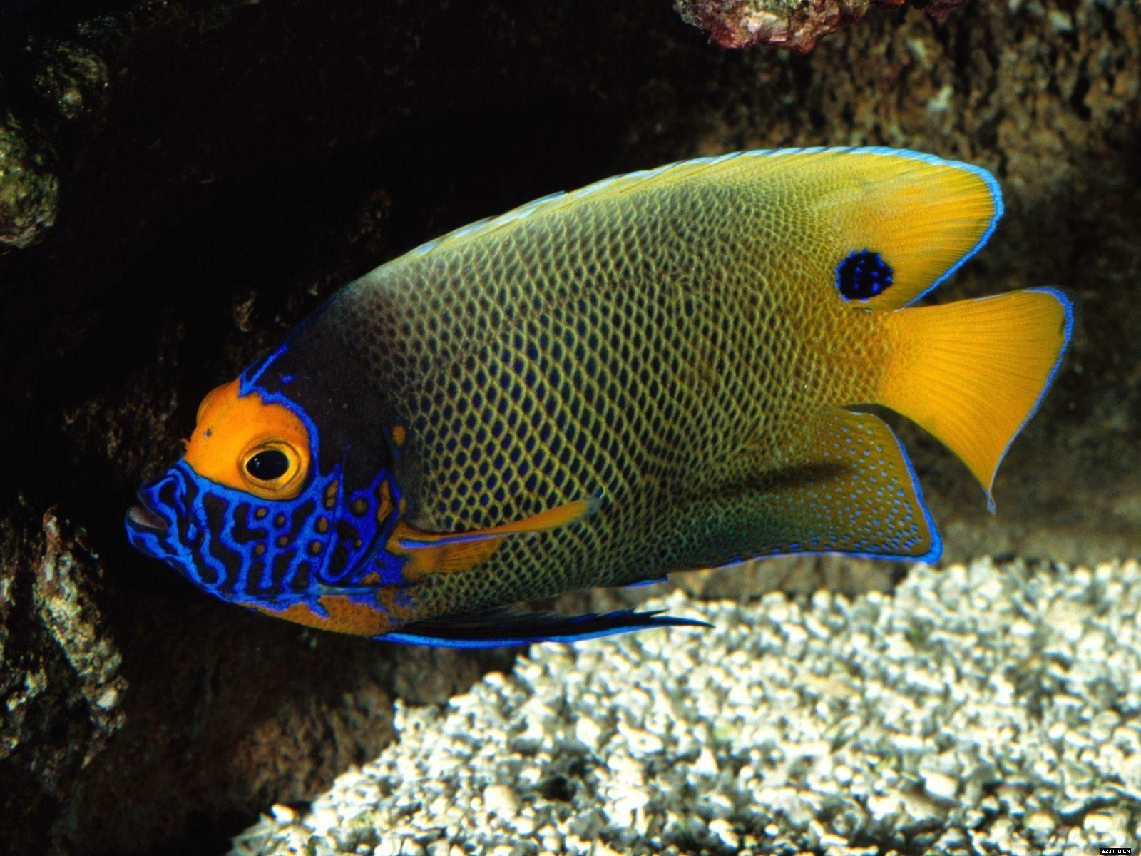 Tropical Fish Wallpapers 45 Best Free Tropical Fish Hd Backgrounds For Android On In 2020 Fish Wallpaper Tropical Fish Hd Backgrounds