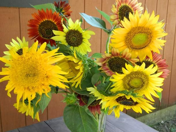 How can you not look at all these sunflowers and not feel better