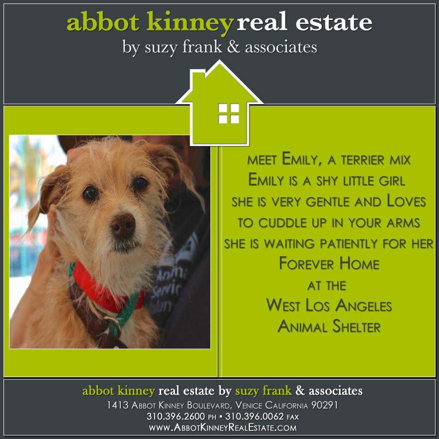 AdoptADog Wednesday! Abbot Kinney Real Estate Dog