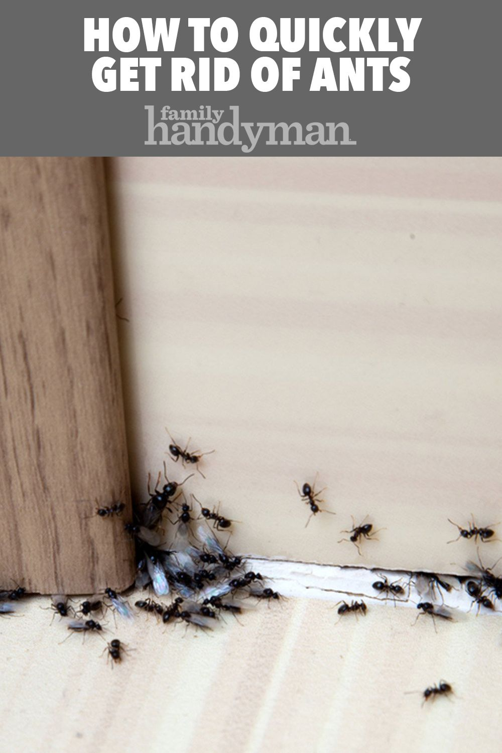 How To Quickly Get Rid Of Ants Get Rid Of Ants Rid Of Ants Ants