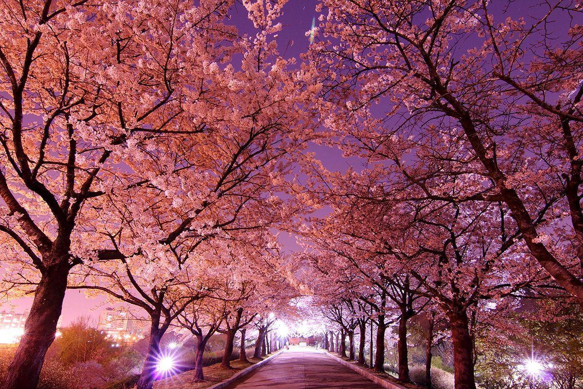 Gambar Pemandangan Korea Pemandangan Alam Yang Indah Gambar