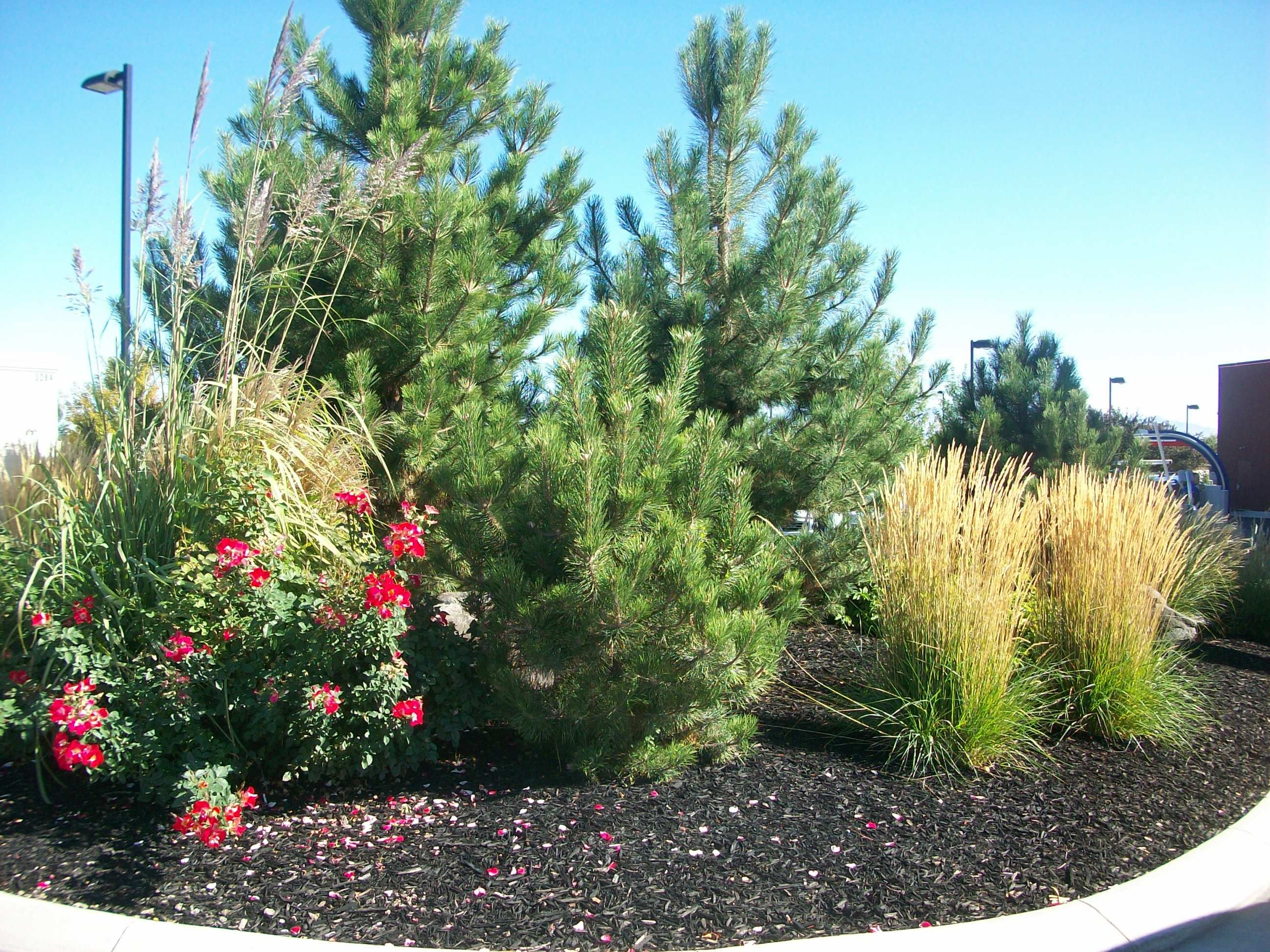 car wash landscaping meridian car wash landscaping car wash landscaping meridian car wash landscaping cars and car wash