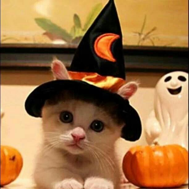 Halloween Cats Sweet Cat Witch Funholidaycats