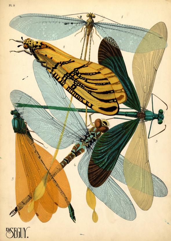 E.A. Séguy, a French artist, created these prints of insects in the 1920s and sold them in pattern books to others who might use them for inspiration i ...