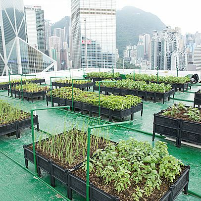 Rooftop Republic Is A Social Enterprise That Promotes Urban Farming And Sustainable Living In Hong Kong Through Urban Farm Urban Farming Rooftop Garden Rooftop
