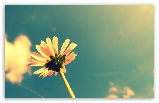 Download Summer Flower Retro Sunshine Hd Wallpaper Colbie