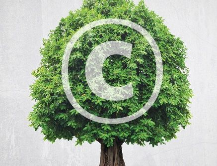 Featured Article: Copyright for Genealogists. In this online Family Tree Magazine article, get the essentials on how copyright affects your genealogy.