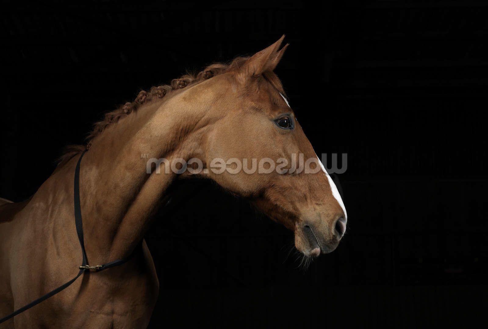 Handsome Horse Horse mural, Horse wallpaper, Horses