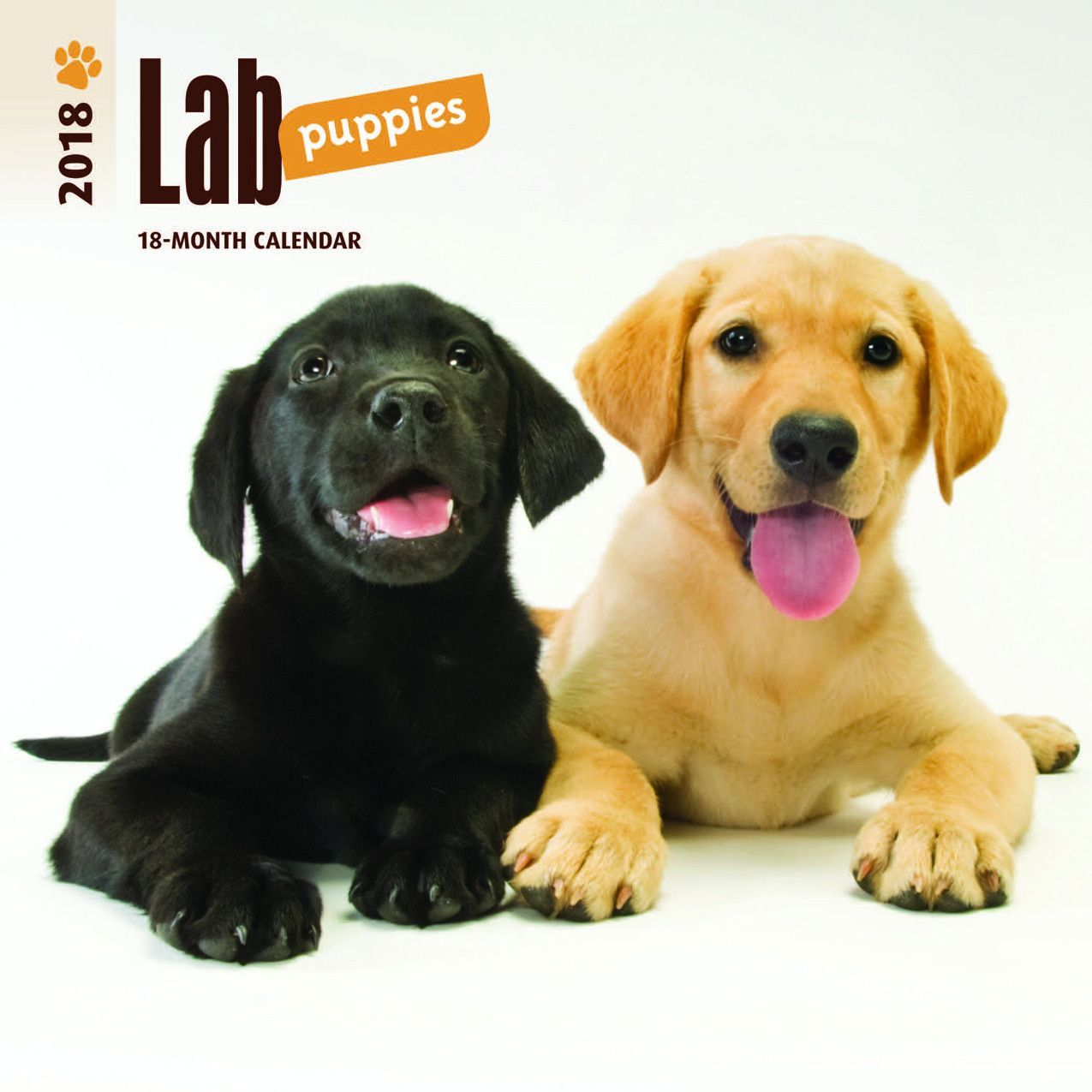 Labrador Retriever Puppies 2018 Mini Wall Calendar