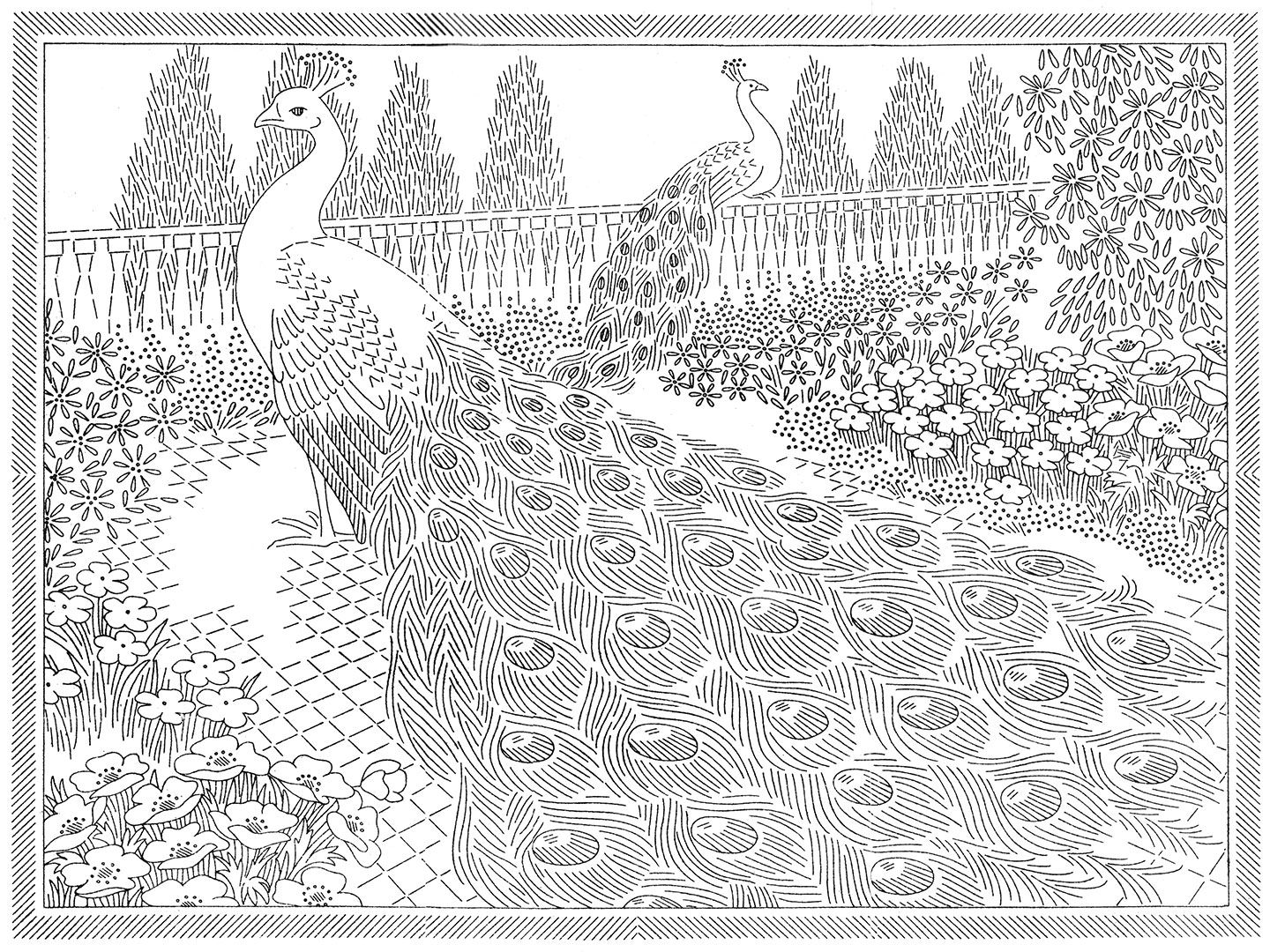 Laura wheeler transfer 777 peacocks peacock pencil sketches this is the last vintage laura wheeler peacock embroidery transfer bankloansurffo Gallery
